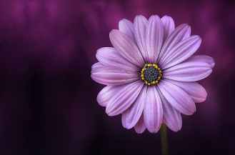 flower-purple-lical-blosso.jpg
